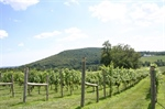 Guide to Central Virginia Wine Country
