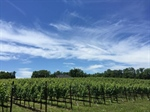 Slater Run Vineyards