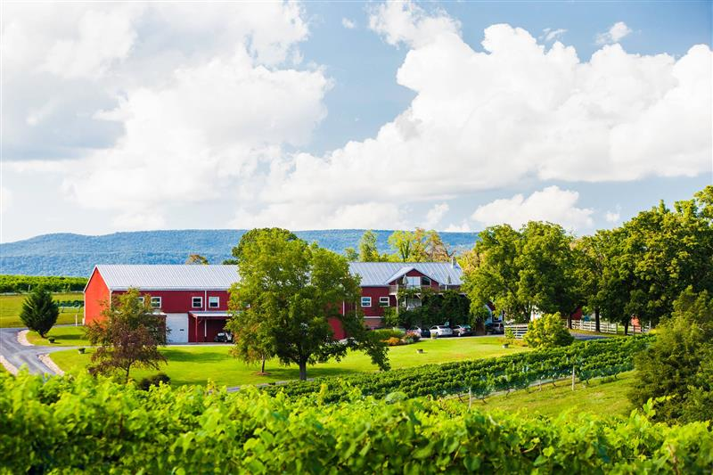 Shenandoah Vineyards