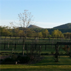 Mountain View Vineyards